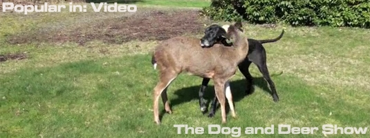 The Dog and Deer Show