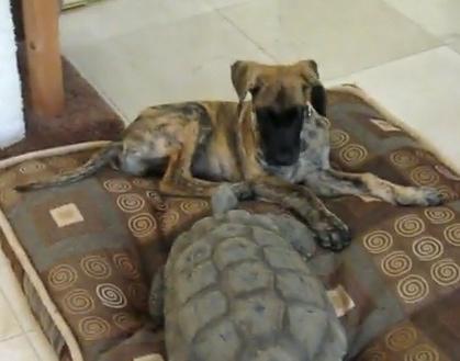 Species Wars: Dog vs. Tortoise