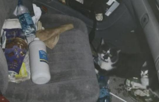 Going for Broke: Gambler Arrested for Leaving 27 Animals in Hot Car
