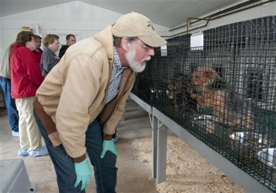 Puppy Mill Progress In Pennsylvania