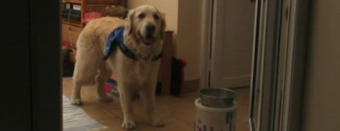 Therapy Dogs: Seizure Detection
