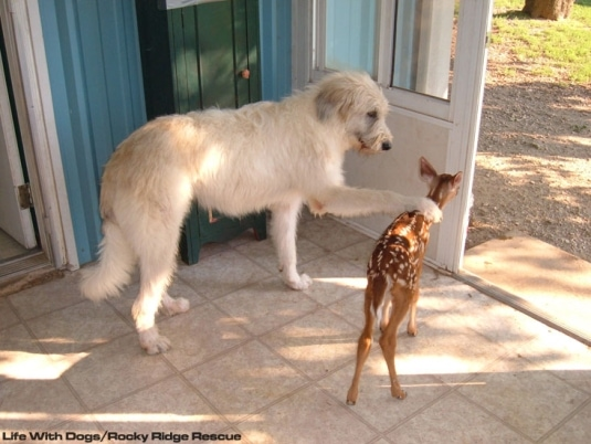 Rescue Of The Month Rocky Ridge Refuge Life With Dogs