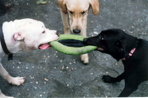 Split Custody of Dog Ordered in Maryland Divorce Case