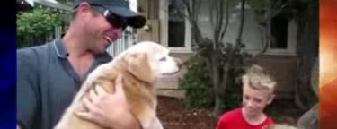 Reunions: Lost Dog Missing for Five Years Returned to Family