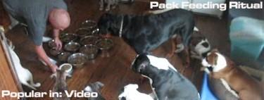 Pack Feeding Ritual