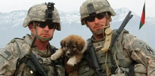 Homecoming: Soldier and War Dogs Reunited