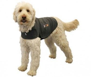Calm Before the Storm: The Thundershirt
