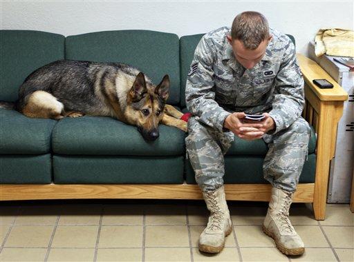 War Dogs and PTSD