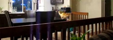 Air Cat