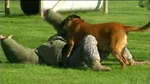 Veteran War Dog Retires