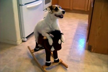 Jesse the JRT's Amazing Dog Tricks