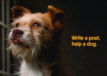 Write a Post, Help a Dog