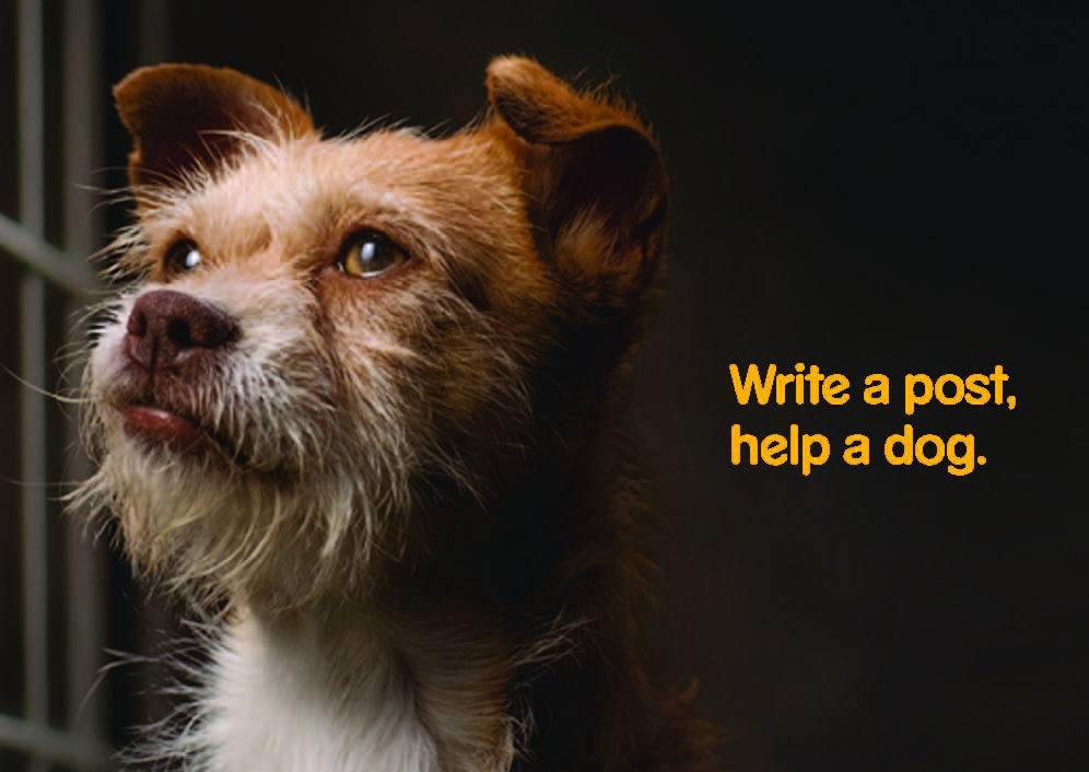 Write a Post, Help a Dog