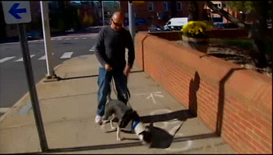 Connecticut Man Caught Striking Dog on Camera, Claims Innocence