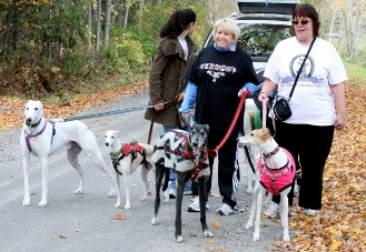October Rescue of the Month: Northern Greyhound Adoption