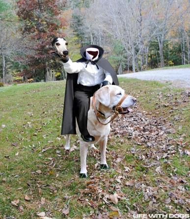 Saturday Pet Blogger Hop/The Legend of Stuffie Hollow