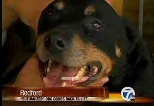 Miracle Dog Euthanized, Comes Back to Life Next Day