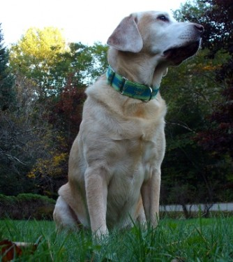 Get Sirius Collar Giveaway Week