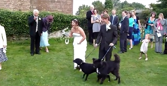 The Wedding Crasher: Dog Lifts Leg on Bride