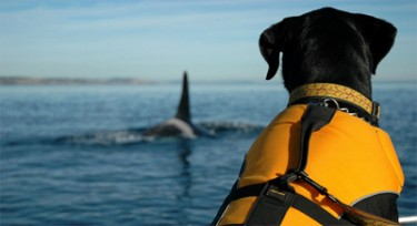 Whale Detectors