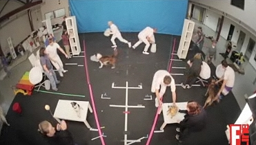 Behind the Scenes: The Making of OK Go's Rescue Dogs Video