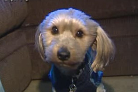 Coincidence or Miracle? Dog, Owner Reunited by Chance