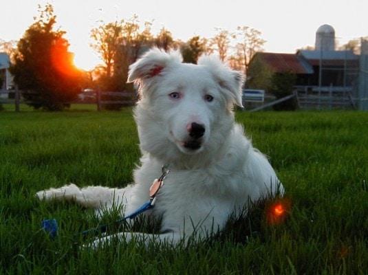 Celebrate Shelter Pets Day