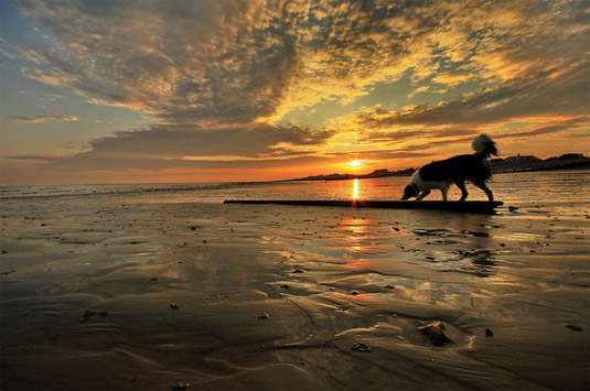 Beautiful Dog Photography #9
