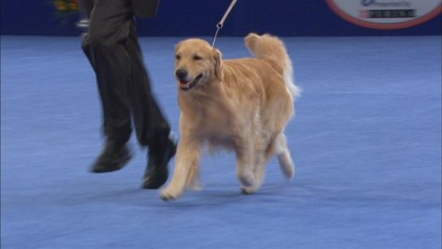 The National Dog Show: Full Broadcast