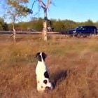 Loyal Dog Waits For Deceased Owner's Return