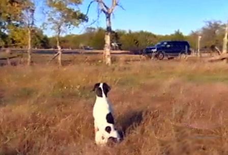 Loyal Dog Waits For Deceased Owner's Return