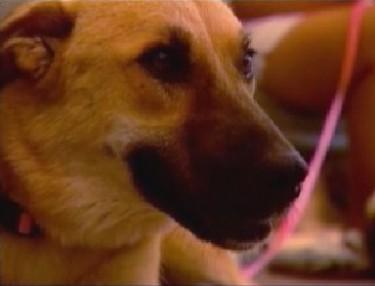 War Hero Dog Target Accidentally Euthanized in AZ Shelter