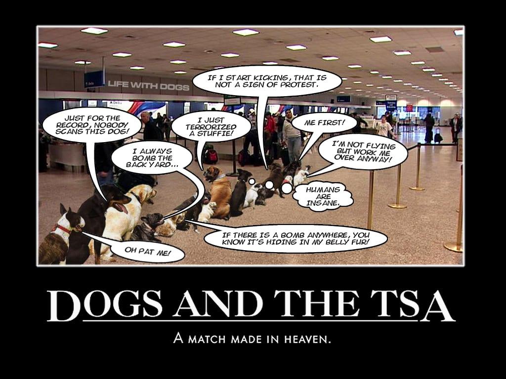 Dogs and the TSA
