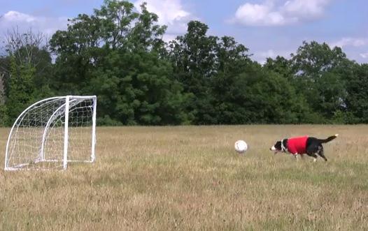 Bamba: Soccer Dog Extraordinaire