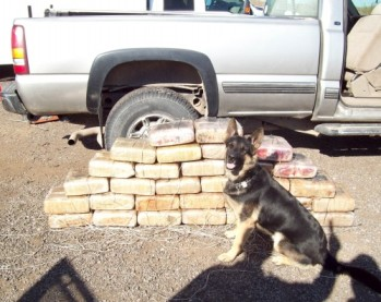 Border Patrol Canine Foils Smuggling Attempt