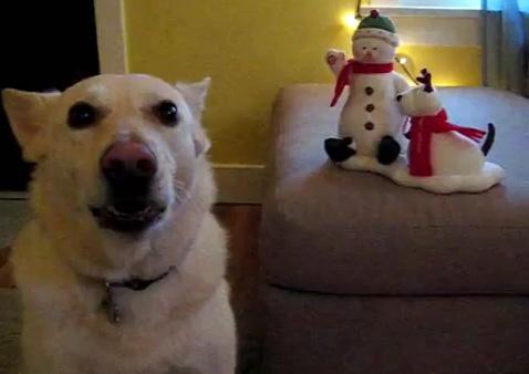 The Saturday Pet Blogger Hop/Jingle Bells Duet