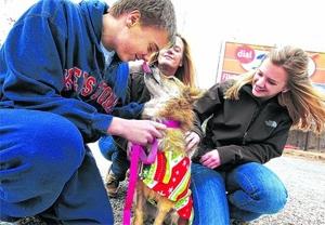 Mark Buehrle: Dog's Best Friend