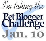 The Pet Blogger Challenge: Q&A