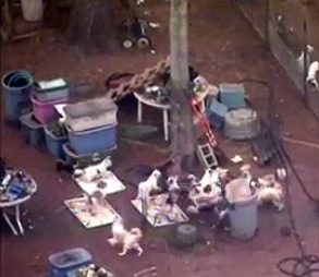 Humane Society Rescues More Than 150 Dogs from TX Home