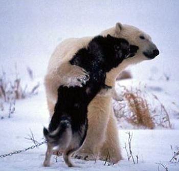 dog and bear buddies