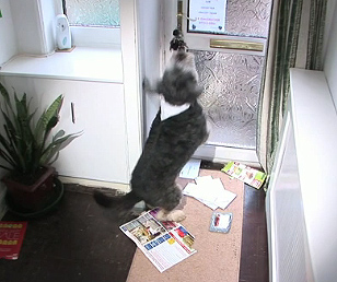 Narcoleptic Dog Passes Out at Sight of Postman