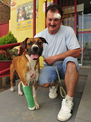 Dog Fends Off Two Armed Attackers, Takes Two Bullets, Saves Owner