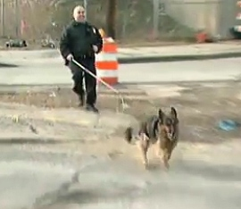 German Shepherd Dodges I-95 Traffic