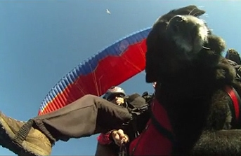 Kui the Paragliding Dog