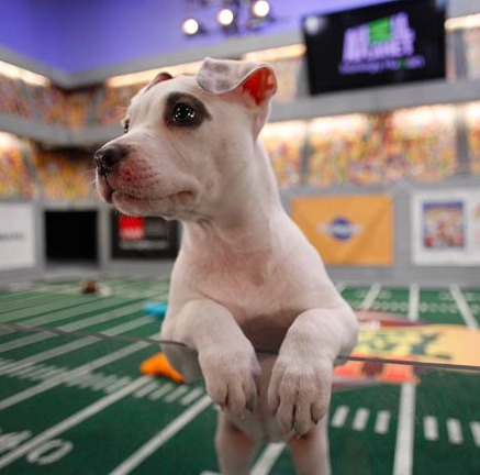 Puppy Bowl VII: The Making of Puppy Bowl