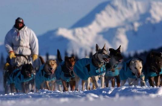 BC SPCA Investigates Mass Dog Kill in Whistler