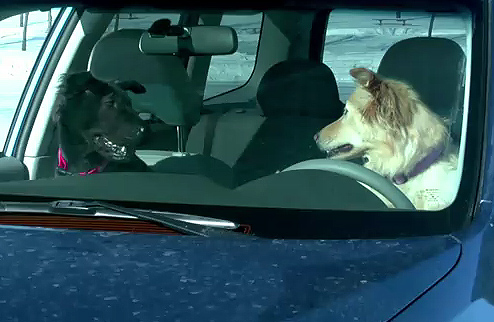 Dogs Doing Donuts