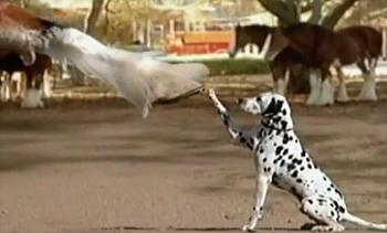 5 Fantastic Super Bowl Dog Commercials