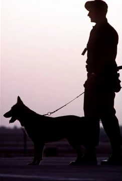 A Salute to Military Dogs