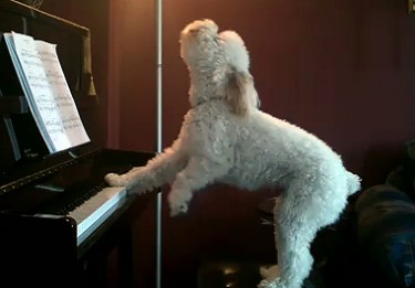 Tucker Tickles the Ivories